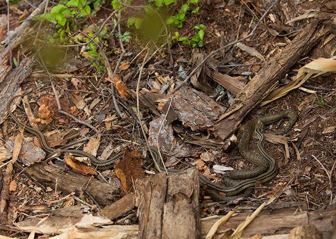 ヘビが土をはう(2)
