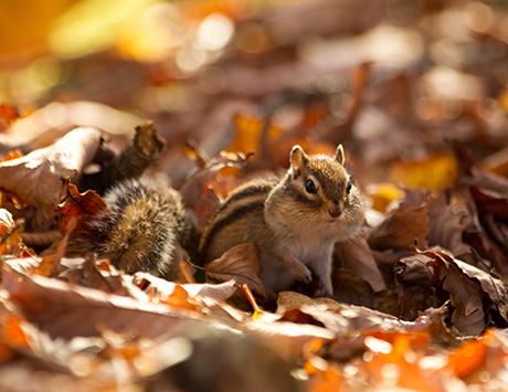 10月 食べる、集める、迎える冬のため
