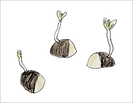 ジャガイモの母