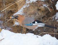 3月 ぽっかりあいた雪穴にも春の気配
