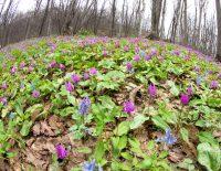 4月 いたる処で春が!