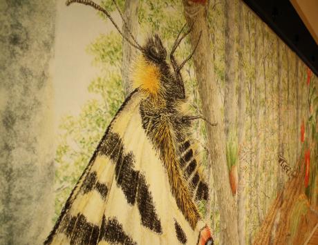 夏休みのおたのしみ! 舘野鴻絵本原画展 ぼくの昆虫記