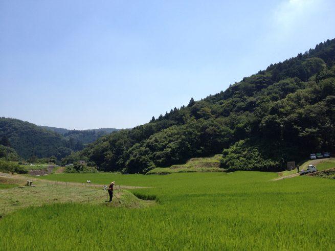 山間の田んぼと青い空。遠くで麦わら帽子のおじさんが草刈りをしている。