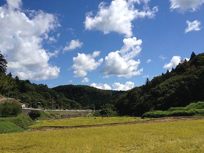 秋の棚田のようす。山間の青い空の下に黄金の稲穂がゆれる