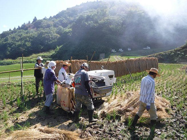 キャタピラのついた大きな脱穀機をうごかす3人の大人。稲架にそってうごかしている。