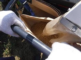 袋におちる籾のアップ。
