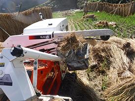 脱穀機から籾のとれた稲藁が田んぼに落ちていく。