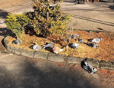 外濠にくらす鳥たち その1