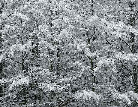 雪は北の大地の演出家、12月