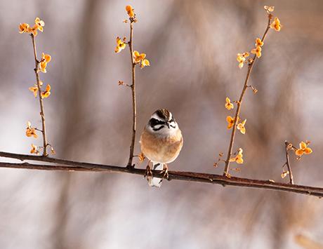 給餌台に鳥のお客のくる、1月